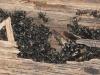 carpenter-ants1