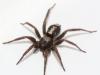 spider3